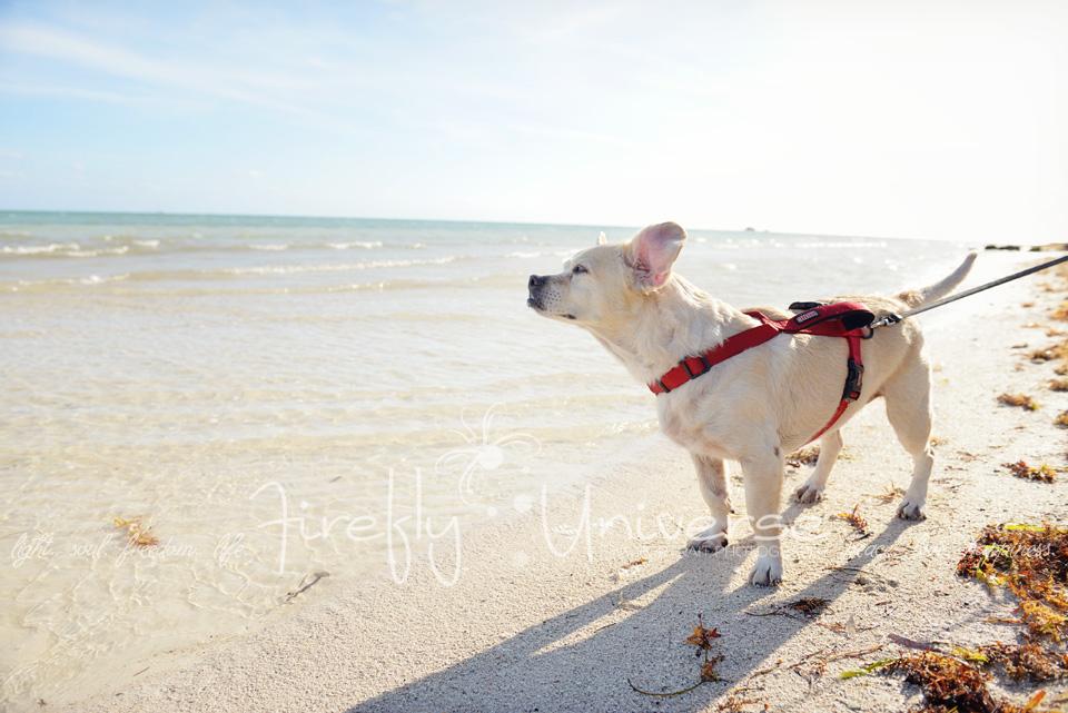 florida-vacation-photographer (24)