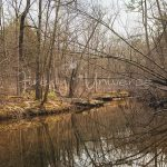 Hawn State Park Hiking, backpacking, Nature photographer